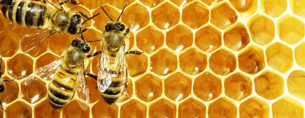 Amphenol Procom IoT Solution Helps Honey Production